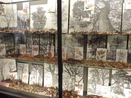 Sezione di Botanica - alberi e arbusti del territorio