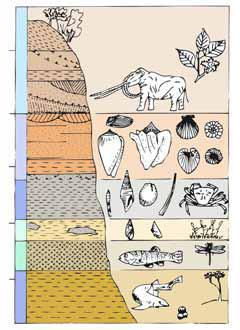 Gli strati geologici che compongono le nostre colline, ciascuno la pagina di un grande libro